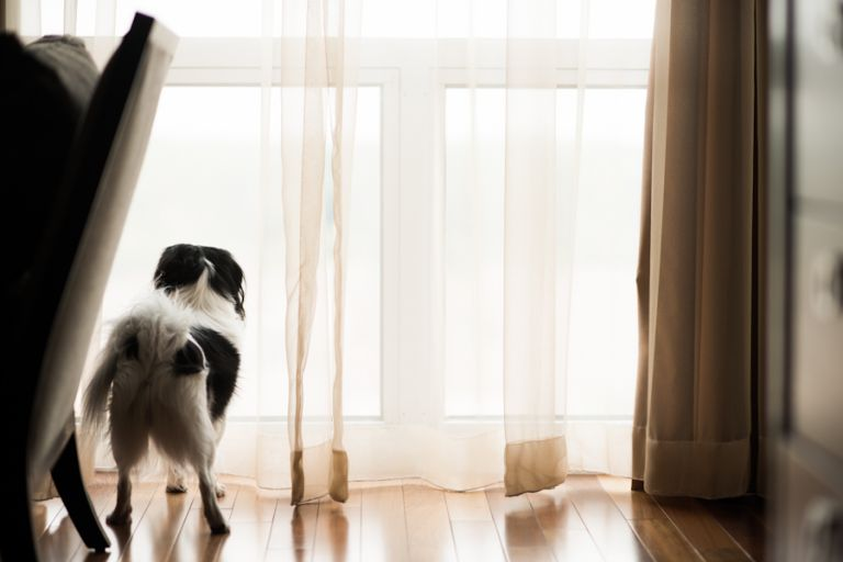 Dog looks out of the window on Tessa and Dave's wedding day at the Heldrich Hotel in New Brunswick, NJ. Captured by awesome northern NJ wedding photographer Ben Lau.