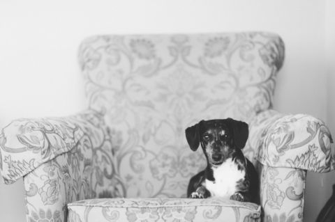 Dog sits on a couch on the morning of a wedding day at the Inn at New Hyde Park. Captured by NYC wedding photographer Ben Lau.
