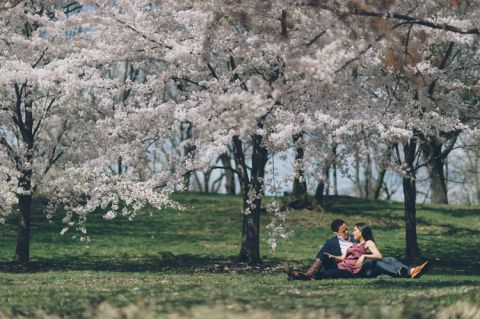 NJ Cherry Blossoms engagement session in Branch Brook Park and Montclair. Captured by NJ wedding photographer Ben Lau.